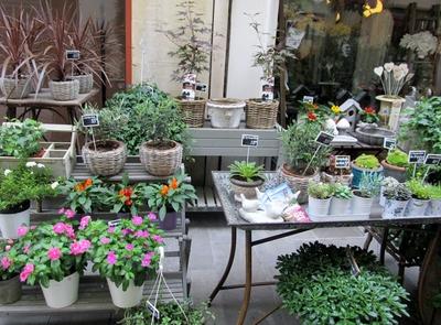 Arles fleuriste.JPG
