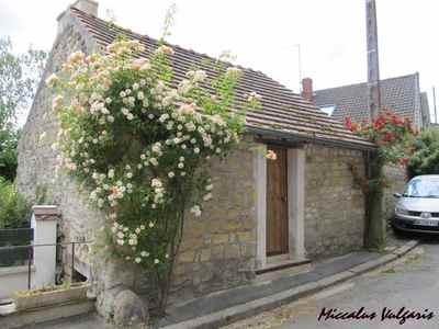 Auvers-sur-Oise (62 miccalus vulgaris).jpg
