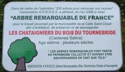Celle Saint Cloud Châtaigniers de Tournebride.jpg