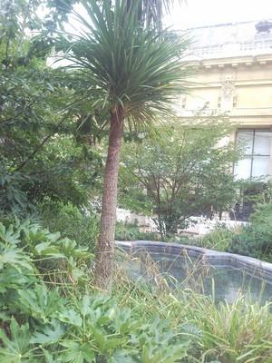 Yves saint laurent Petit Palais (10) (600x800).jpg