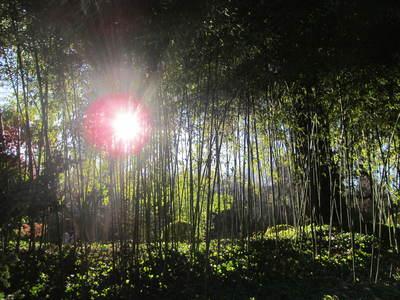 albert kahn jardin japonais (13).JPG