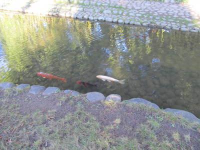 albert kahn jardin japonais (47).JPG