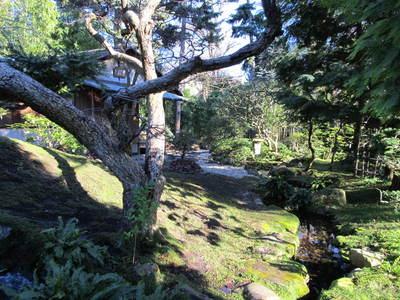 albert kahn jardin japonais (5).JPG
