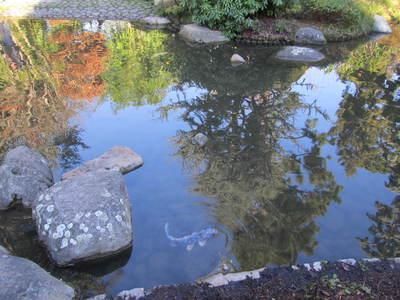 albert kahn jardin japonais (73).JPG