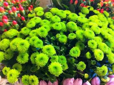 fleur vert jaunatre.jpg