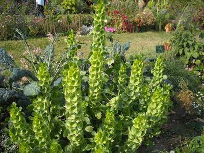 jardin des plantes (5).JPG