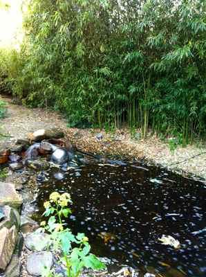 la mare aux oiseaux jardin 2.jpg