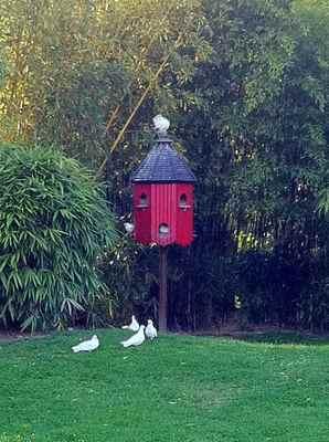 la mare aux oiseaux jardin 7.jpg