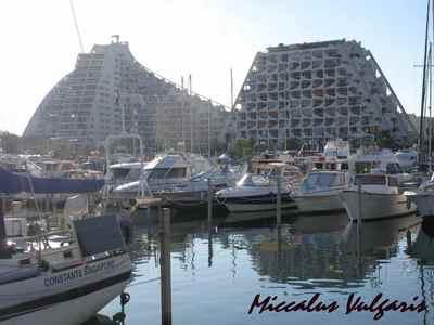 le grande-motte yacht MV.jpg
