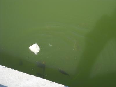 poisson in tuileries (4).JPG