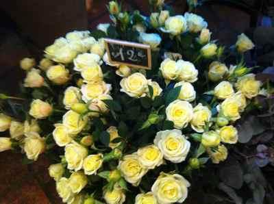 rose blanche.jpg